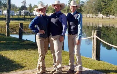 Sandhaven Performance Horses – USA